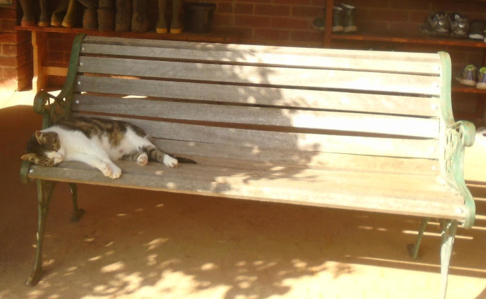 cat on a bench in the shade